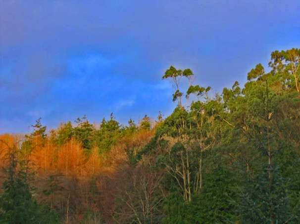Glenbower Woods in theAutumn