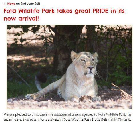 Lions at Fotsa